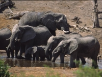 Elephants-at-waterhole04