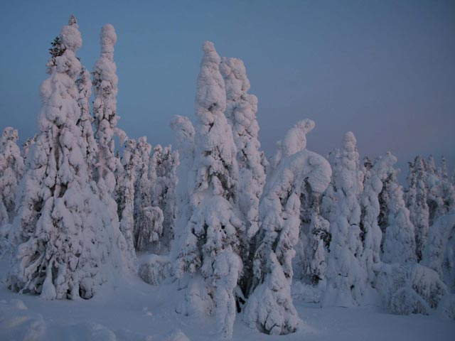 snow-covered-trees-two
