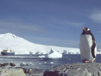 gentoo-and-boat